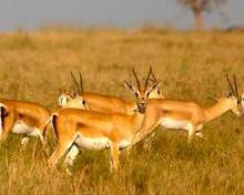 Safari holiday in Africa